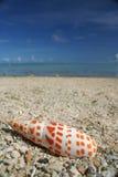 Seashell de plage de la Guam Photos stock