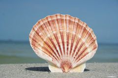 Seashell debout photos stock