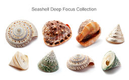 Seashell Deep Focus Collection Stock Image