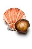 Seashell del cioccolato nella parte anteriore Fotografia Stock