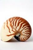 Seashell del nautilus Foto de archivo