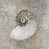 Seashell del Nautilus Fotografie Stock Libere da Diritti