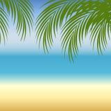 Seashell del pettine sul colore rosa illustrazione di stock
