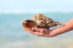 Seashell in der Hand Lizenzfreies Stockbild