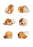 Seashell in different angles. On white background Royalty Free Stock Photo