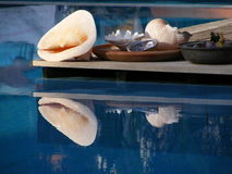 Seashell Display. Different sea shells glistening in the sun by the side of a swimming pool in Turkey Stock Photo