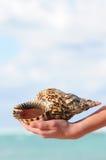 Seashell a disposizione Immagine Stock