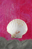 Seashell do Scallop na cor-de-rosa foto de stock royalty free