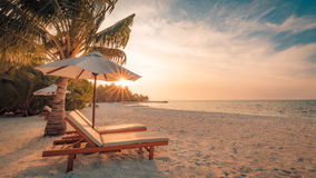 Seashell do Scallop na cor-de-rosa Paisagem bonita da praia Cena tropical da natureza Palmeiras e céu azul Conceito das férias de Fotos de Stock Royalty Free