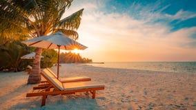 Seashell do Scallop na cor-de-rosa Paisagem bonita da praia Cena tropical da natureza Palmeiras e céu azul Conceito das férias de fotografia de stock