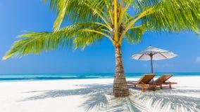 Seashell do Scallop na cor-de-rosa Paisagem bonita da praia Cena tropical da natureza Palmeiras e céu azul Conceito das férias de Imagens de Stock Royalty Free
