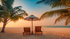 Seashell do Scallop na cor-de-rosa Paisagem bonita da praia Cena tropical da natureza Palmeiras e céu azul Conceito das férias de Imagem de Stock