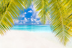 Seashell do Scallop na cor-de-rosa Paisagem bonita da praia Cena tropical da natureza Palmeiras e céu azul Conceito das férias de imagem de stock royalty free