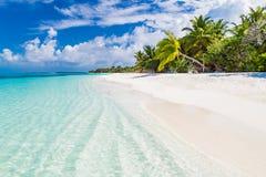 Seashell do Scallop na cor-de-rosa Paisagem bonita da praia Cena tropical da natureza Palmeiras e céu azul Conceito das férias de Fotos de Stock