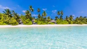 Seashell do Scallop na cor-de-rosa Paisagem bonita da praia Cena tropical da natureza Palmeiras e céu azul Conceito das férias de Foto de Stock