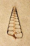 Seashell do telescópio fotos de stock