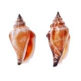 Seashell dois espiral fotos de stock royalty free