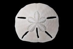 Seashell - dollar de sable Photos libres de droits