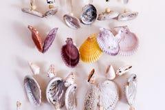 Seashell dream catcher Stock Photography
