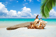 Seashell and drift wood on the beach Royalty Free Stock Photography