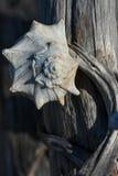 Seashell and driftwood Royalty Free Stock Photos