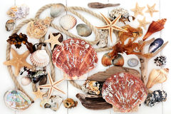 Seashell Driftwood Rock and Seaweed Collage Royalty Free Stock Photography