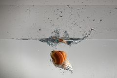 Seashell dropping in the water making stock photo