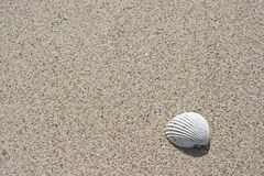 Seashell e areia Fotografia de Stock