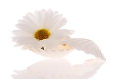 Seashell e flor imagens de stock