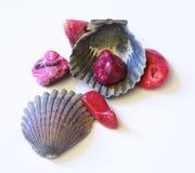 Seashell e pedras Imagens de Stock