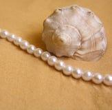 Seashell e perle fotografia stock