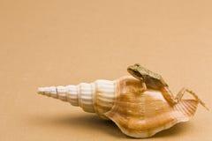 Seashell e rana immagine stock
