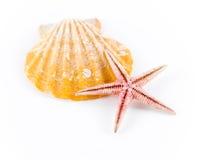 Seashell e starfish Fotografia de Stock Royalty Free