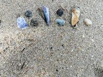 Seashell en la arena imágenes de archivo libres de regalías