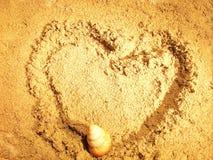 Seashell en la arena Imagen de archivo libre de regalías