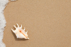 Seashell en la arena de la playa Imagen de archivo
