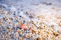Seashell en la arena y Pebble Beach Imagen de archivo