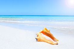 Seashell en la playa imagen de archivo