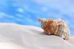 Seashell en la playa fotos de archivo libres de regalías