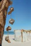 Seashell en la playa Fotografía de archivo libre de regalías