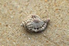 Seashell en la playa de la arena imagen de archivo