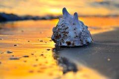 Seashell en la playa en la puesta del sol Imagenes de archivo