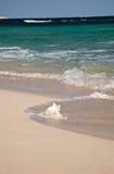 Seashell en mer des Caraïbes photos stock