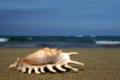 Seashell en orilla Fotos de archivo libres de regalías