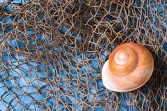 Seashell en red de pesca Imagen de archivo libre de regalías