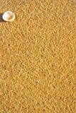 Seashell en sable de plage. photo libre de droits