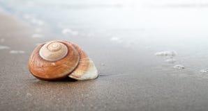 Seashell espiral Foto de archivo libre de regalías