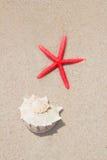 Seashell et étoiles de mer en plage blanche de sable images stock