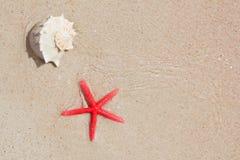 Seashell et étoiles de mer en plage blanche de sable photo stock