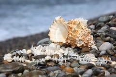Seashell et collier sur le littoral en pierre images libres de droits
